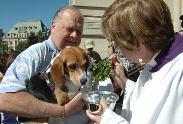Pet blessing at the Washington National Cathedral