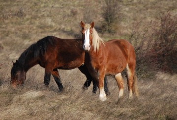 horses at Duchess Sanctuary saved from equine cruelty
