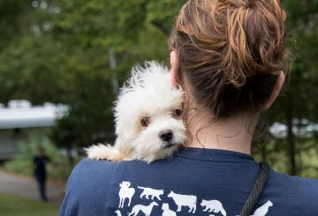 Puppy mill rescue dog