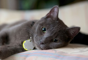 Animals | The Humane Society of the United States