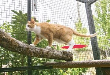 Cat walking on tree limb within a safe catio enclosure
