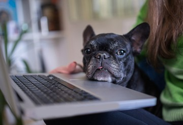 Dog resting her chin on a laptop