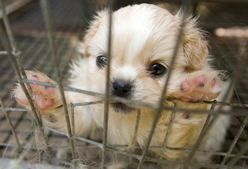 puppy mill rescue puppy