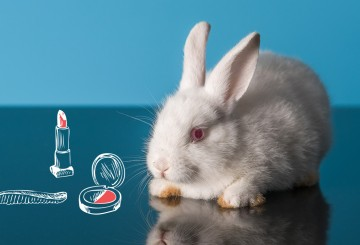 Ending Cosmetics Animal Testing | The Humane Society of the