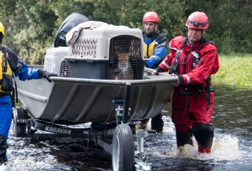 Field responders pushing a boat to shore with cats on board