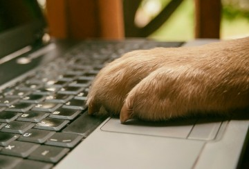 Dog with paw on computer