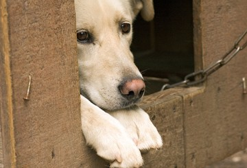 Chaining and tethering dogs FAQ | The Humane Society of the