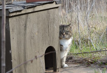 Feral cat sitting next to a cat house