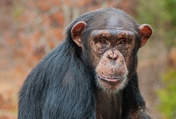 Charisse sits on the platform outside her group's villa at Project Chimps
