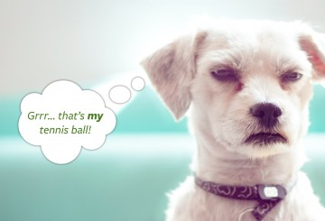 Photo illustration of a dog being possessive about his tennis ball