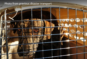 Dog in cage, waiting for transport from a disaster to safety