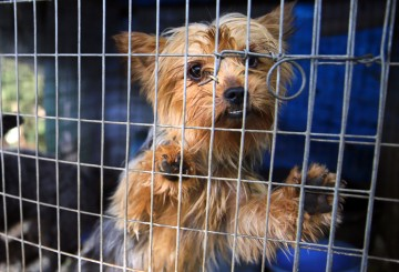 Dogs suffering in a filthy cage outside at a puppy mill in Mississippi.