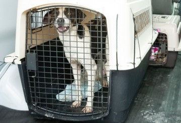 Dog in a crate as HSUS helps to transport animals out of Tropical Storm Barry's path