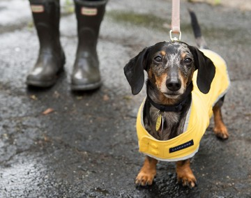Small dog wearing a rain jacket