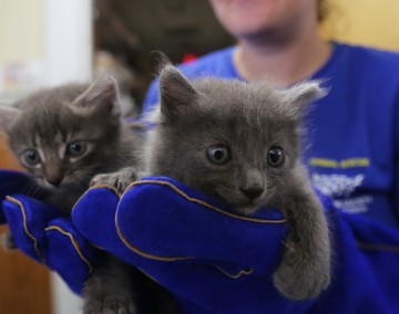 HSUS Animal Rescue Team member holding two kittens rescued in Hurricane Michael Response