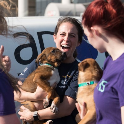Volunteers and HSUS staff help the the arrival of more than 50 dogs and 75 cats at the Manassas Regional Airport.