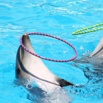 dolphins performing unnaturally in captivity