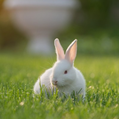 rabbit are often used for cosmetics testing