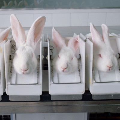 Ending Cosmetics Animal Testing The Humane Society Of The United