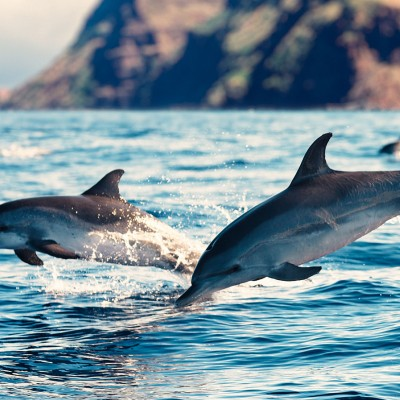 Wild dolphins swimming free in the ocean