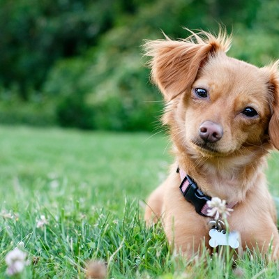 Frequently asked questions | The Humane Society of the