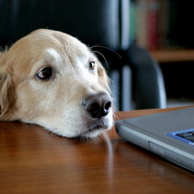 A dog looking at a computer