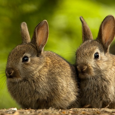 Rabbits | The Humane Society of the United States