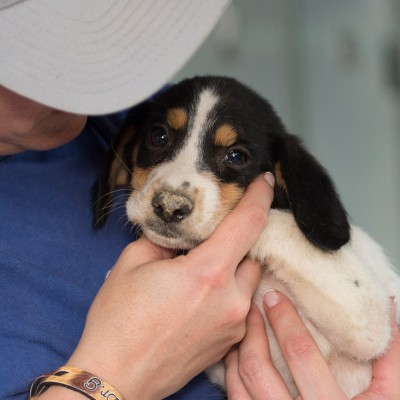 Animal rescue | The Humane Society of the United States