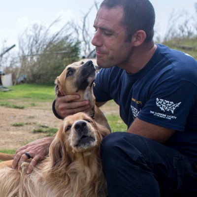 Dogs being cared for in Puerto Rico after Hurricane Maria