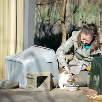 Beth McNulty putting out food and water for feral cats
