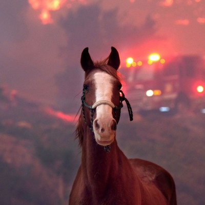 Horse with a firetruck and the California wildfires in the background