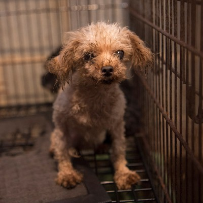 Dog in rusty cage at a puppy mill before being rescued
