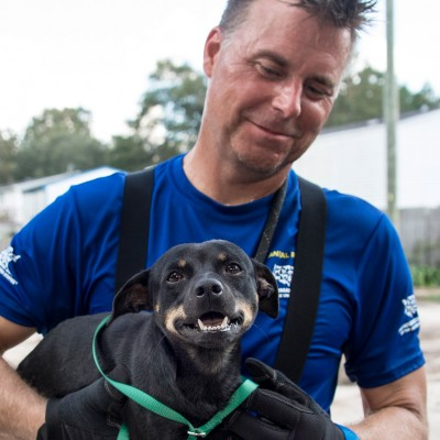 Dog and rescuer during HSUS efforts following Hurricane Florence in South Carolina