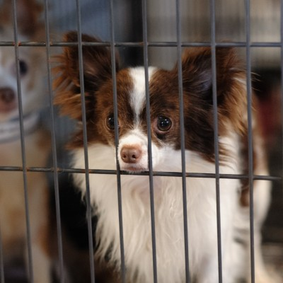 69b2bf0cd187 Stopping Puppy Mills