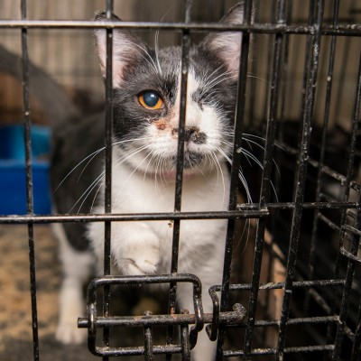 Injured cat in a dirty cage found at a TX home
