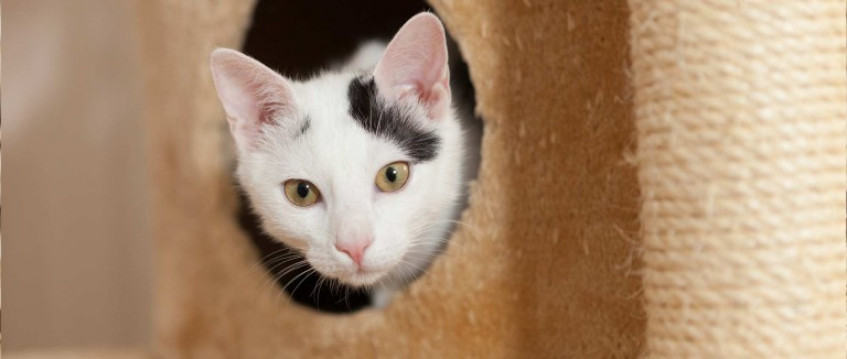 Home Sweet Home How To Bring An Outside Cat Indoors The Humane Society Of The United States