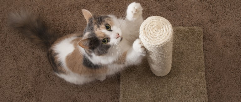 Cat clawing a scratching post