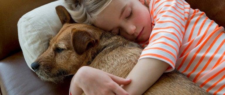 Persuasive Essay on Adopting a Dog