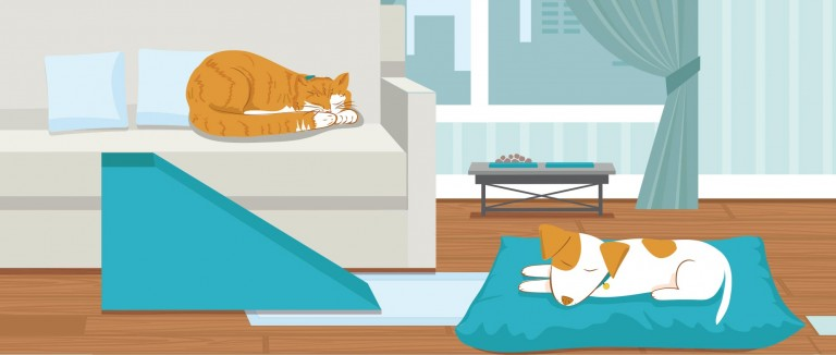 Illustration of a geriatric cat and dog in a home