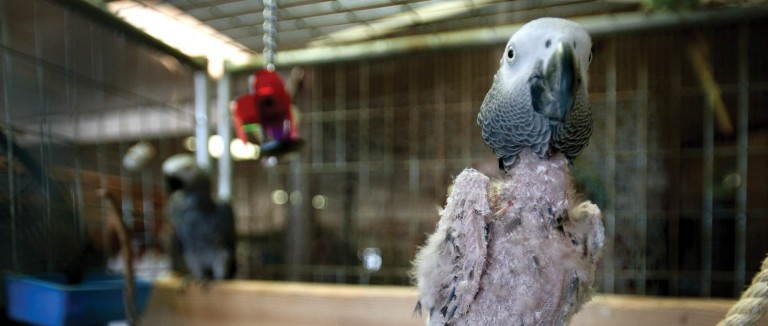No-fly zone: Denied their natural habits, millions of pet