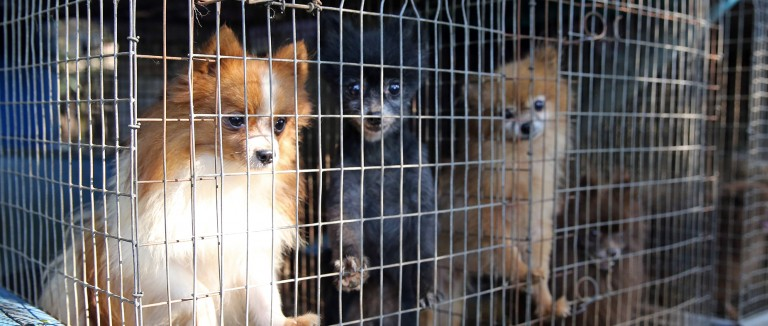 Dogs in wire cages at a suspected puppy mill.