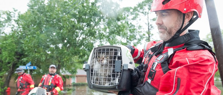 HSUS Animal Rescue Team rescuing a cat following Hurricane Harvey