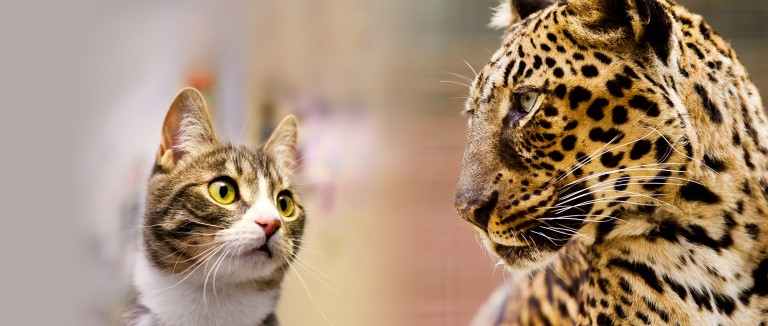 Which cat is living next door? | The Humane Society of the