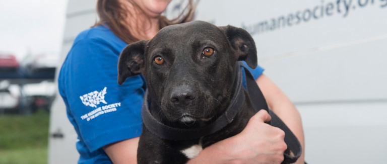 Disaster FAQ   The Humane Society of the United States
