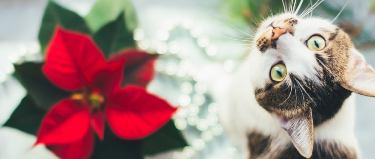 Holiday Safety Tips For Pets The Humane Society Of The United States
