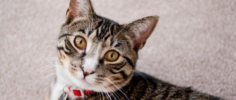 cat marking or uti